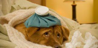Choroby serca u psów – jak wykryć i jak leczyć?